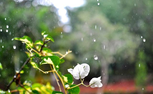 В Крыму 25 июня снова пройдут дожди (прогноз погоды)