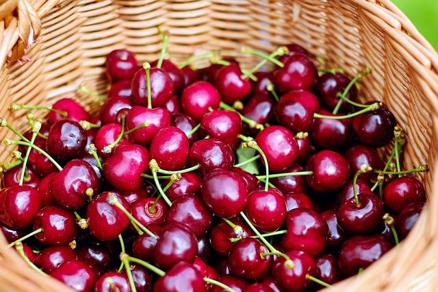 В Севастополе собирают ранние сорта черешни