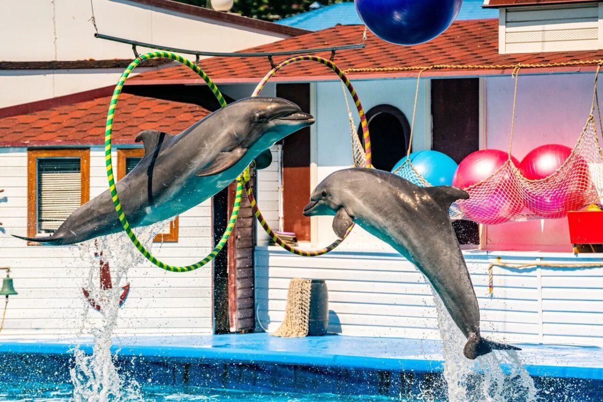 Севастопольский дельфинарий в Артбухте демонтируют — решение суда