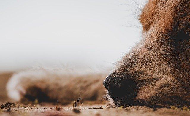 В Ялте женщина сбила собаку и скрылась с места ДТП
