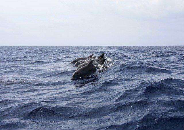 В каких городах Крыма можно увидеть дельфинов в родной среде