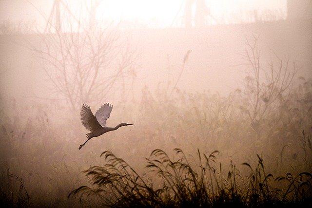 В Севастополе 22 июня туман, в Крыму – грозы