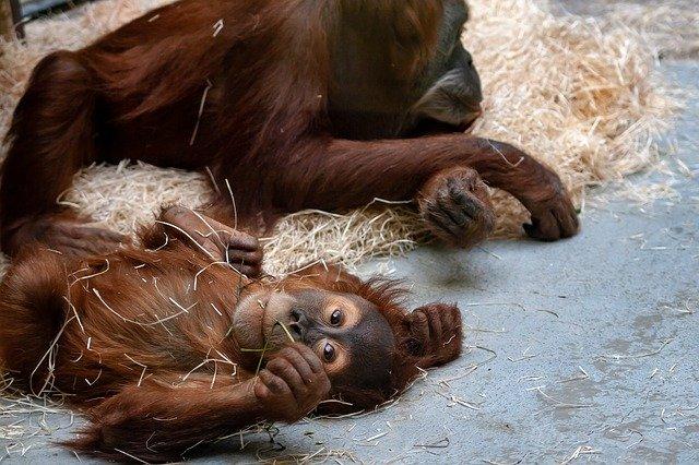 В Севастополе запретили работу зоопарка на частном земельном участке