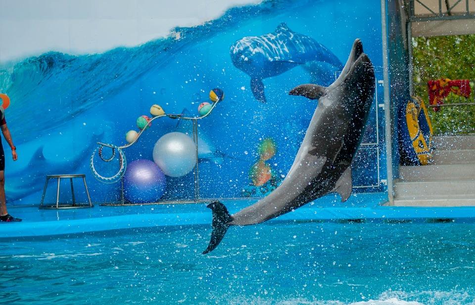 Севастопольский дельфинарий понуждают освободить незаконно занятую набережную
