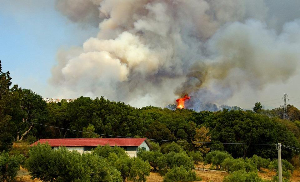 В Севастополе с начала года произошло 5 лесных пожаров
