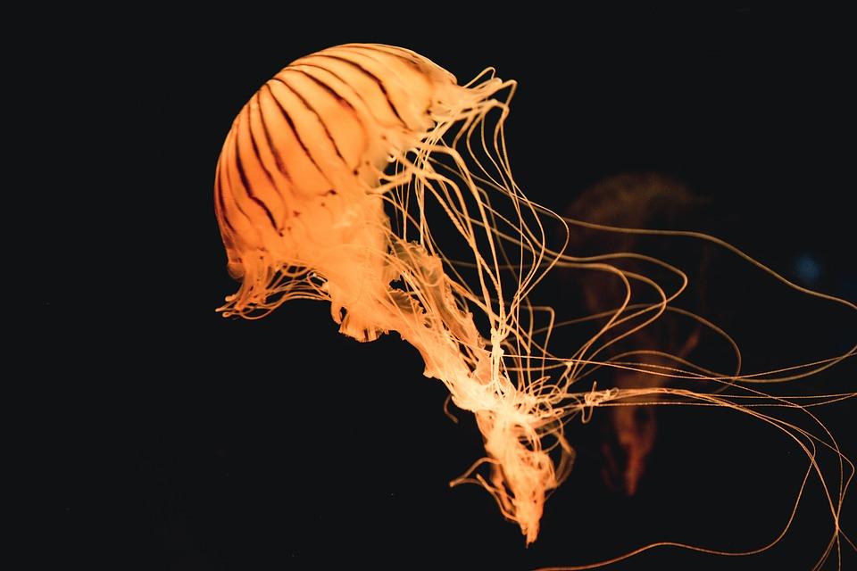 Вблизи мыса Фиолент катер перевернулся по вине туристов и медузы