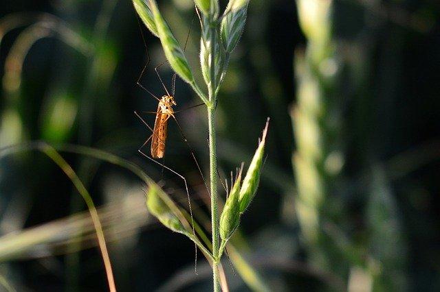Ученый объяснил причину нашествия комаров в Крыму