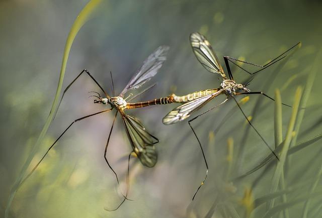 Американские ученые создали одежду, устойчивую к укусам комаров