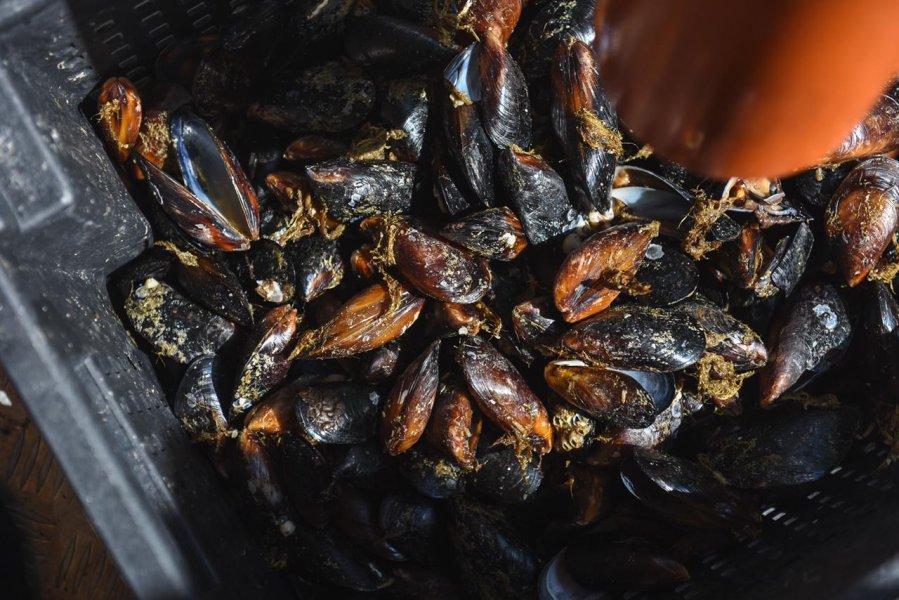 Морская мидийная ферма в Севастополе нацелилась собрать 200 тонн марикультуры
