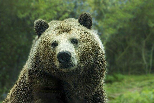 Камчатский депутат-миллионер признался, что застрелил человека, пугая медведя