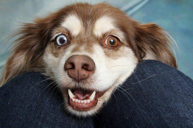 Пассажирка самолета из Крыма получила 15 суток ареста за выгул собаки на борту