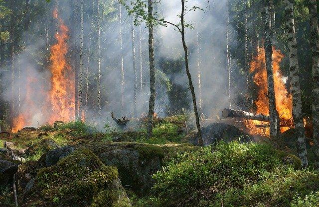 В Ласпи вдоль трассы горел лес (видео)