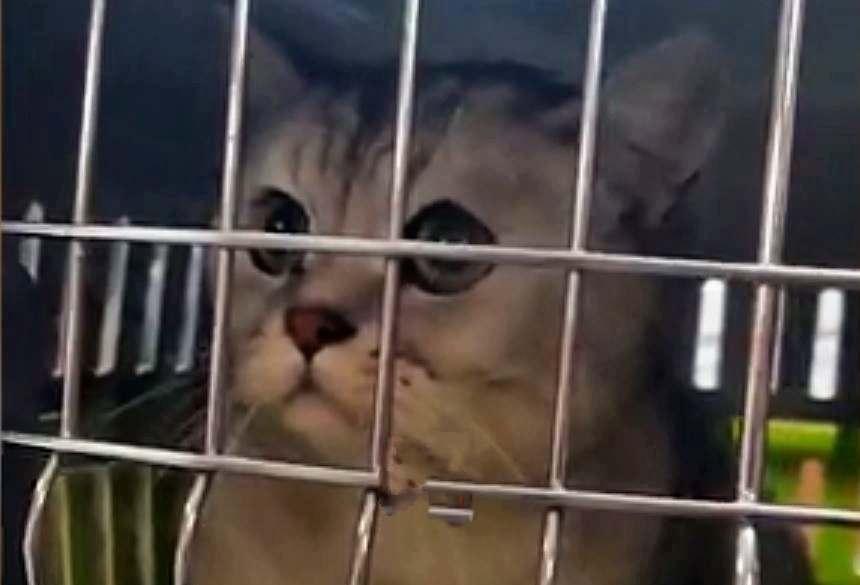 В Ногинске спасли кота, просидевшего три недели без еды после взрыва в доме
