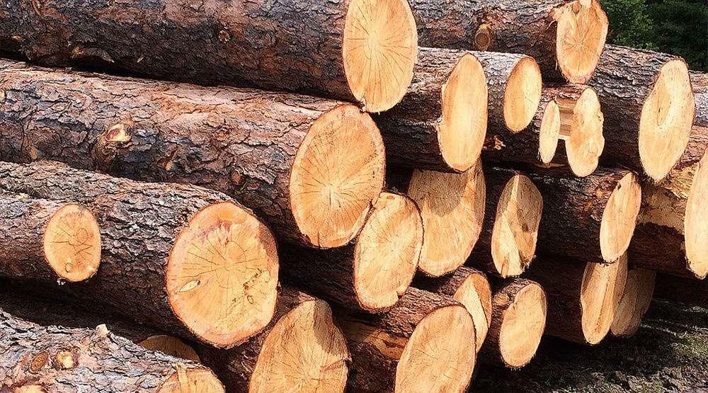 Вывоз леса из России резко увеличился почти на 30%