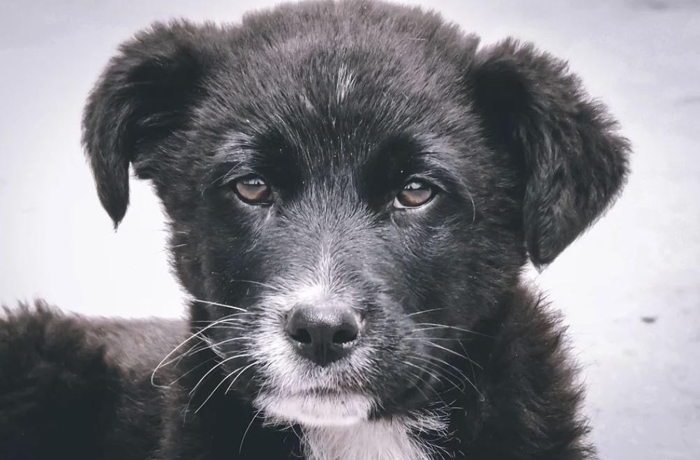 Прокуроры Севастополя хотят через суд заставить чиновников заниматься бездомными животными