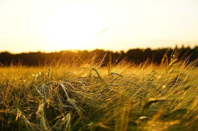 Производители зерна в Крыму получат почти 50 миллионов из федерального бюджета